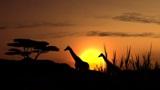 afrika_nacht
